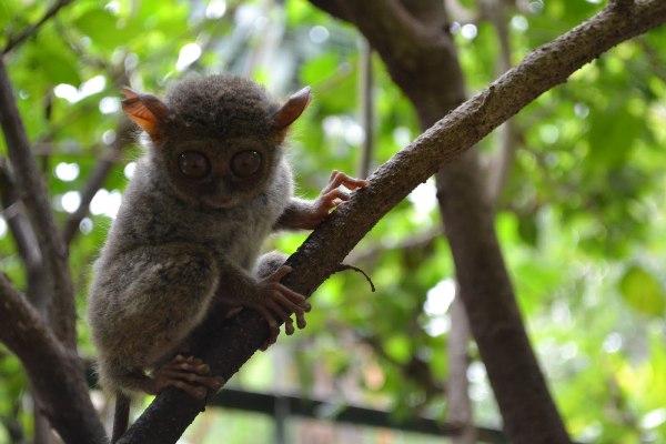 Wisata Taman Tandurusa, Kebun Binatang Khas Manado